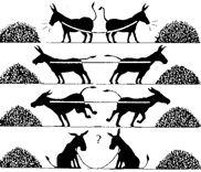 donkey conflict 3